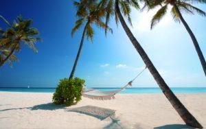 6956038-hammock-beach-palms-paradise